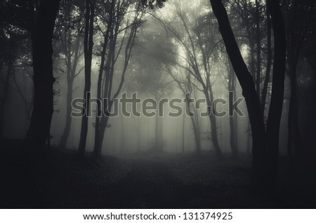 dark foggy forest after rain - stock photo