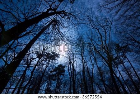 Dark Forest - stock photo