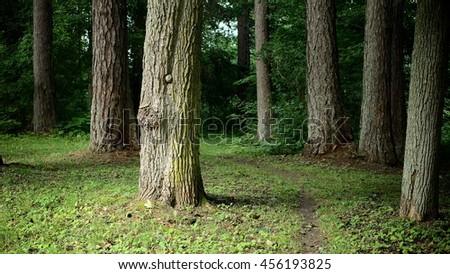 Dark forest and a walkway leading into the thicket - stock photo