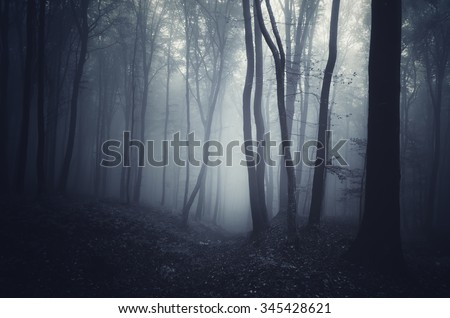 dark forest at night - stock photo