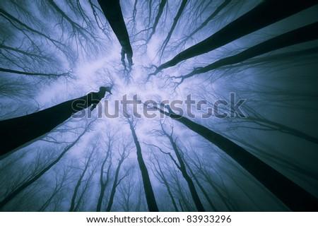 dark forest at night - stock photo