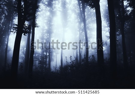 dark forest at night fantasy scene
