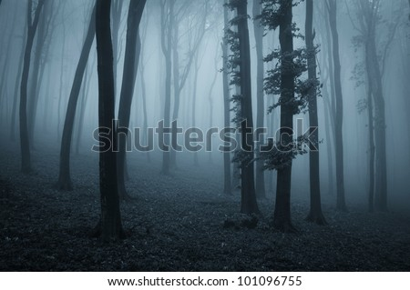 Dark forest at night with black trees and blue light - stock photo