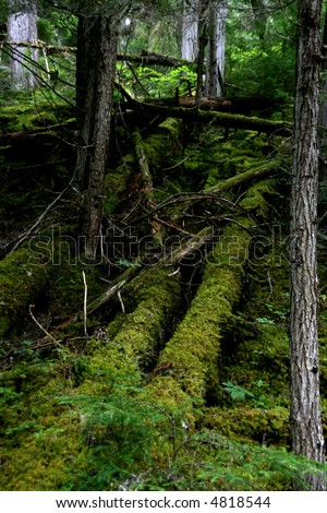 Dark forest floor in Mount Robson Provincial Park of British Columbia (Canada).