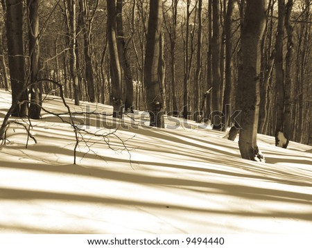 Dark forest in winter. Sunny day beauty shadows - stock photo