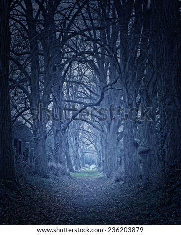 dark forest leading into the horizon. - stock photo