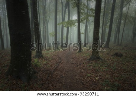 dark forest on a summer night - stock photo