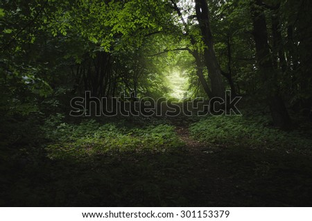 dark forest path in summer - stock photo