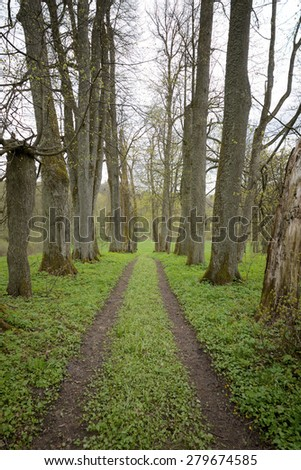 Dark forest road - stock photo
