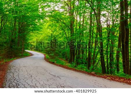 Dark forest road in Plitvice national park-Croatia - stock photo