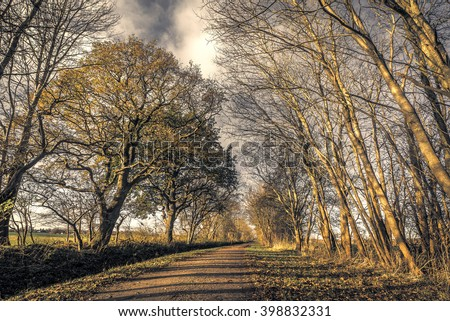 Dark forest with a nature path in the late autumn