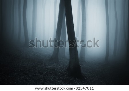 dark forest with blue fog - stock photo