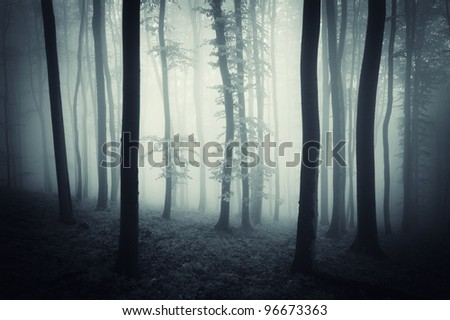 dark forest with fog after rain - stock photo