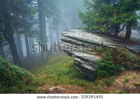 Dark forest with fog in background - stock photo