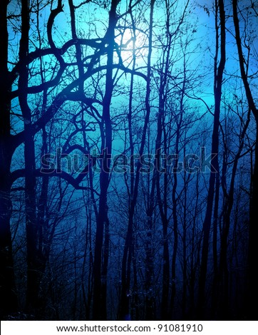dark forest with moonlight - stock photo