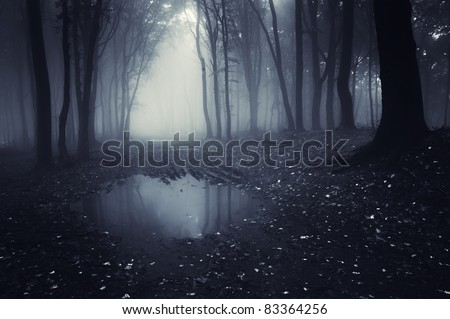 dark forest with pond and leafs on the ground - stock photo