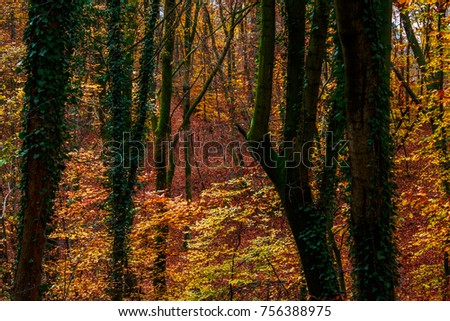 Dark forest with red, orange, green and yellow leaves in a park of Salzburg.