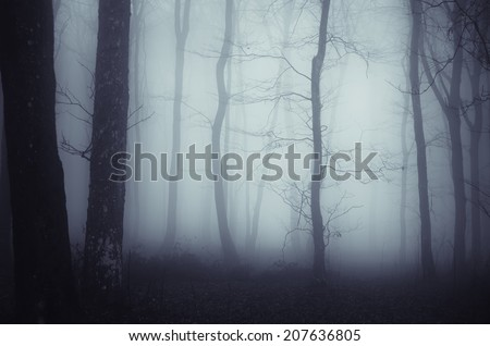 dark forest with spooky twisted trees on halloween night - stock photo