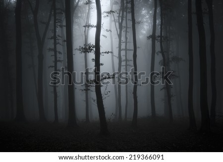 dark forest with sun ray - stock photo