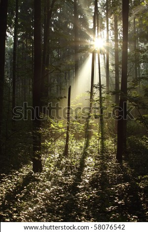 Dark forest with sun rays passing through the trees. - stock photo