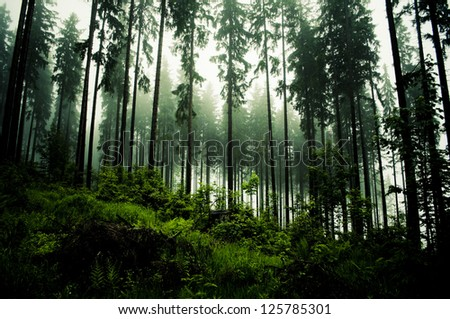 dark forrest - stock photo