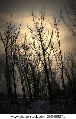 Dark gloomy trees in the park  - stock photo