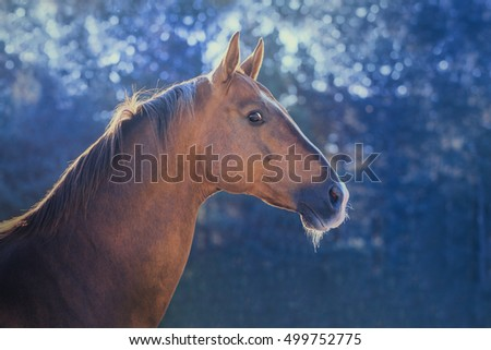 Dark golden horse portrait on nature background