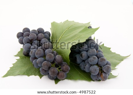 Dark grape with leaf isolated over white background