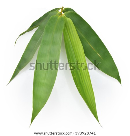 dark green bamboo leave with drop water isolated on white background . This has clipping path. - stock photo