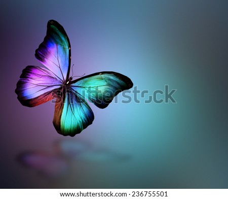 Dark green gold violet butterfly morpho, isolated on background - stock photo