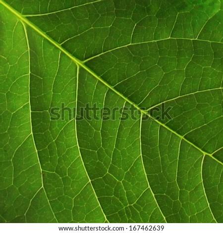 Dark green leaf surface - stock photo