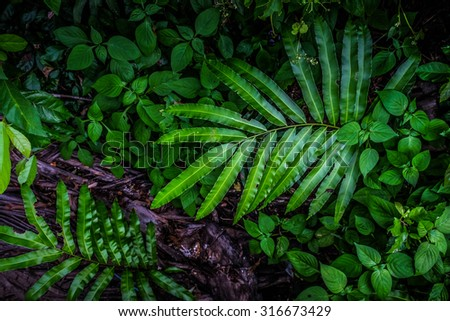 Dark green leaves of a plant with glistening, low key, nature background - stock photo