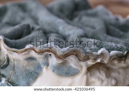 Dark grey or Black Mold Fungus growing on old cheese - stock photo