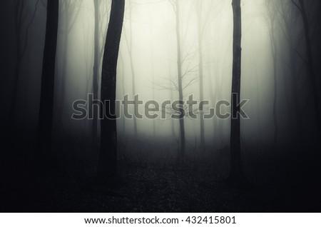 dark halloween forest - stock photo