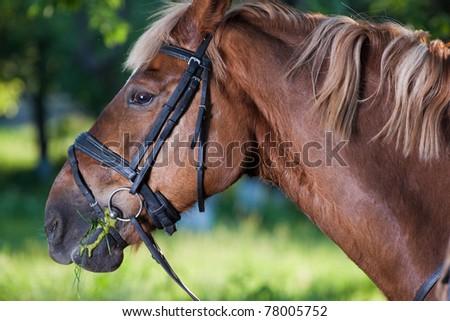 Dark horse in park - stock photo
