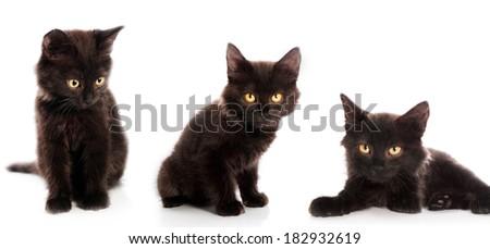 dark kittens on a white background - stock photo