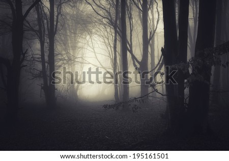 dark misty forest - stock photo
