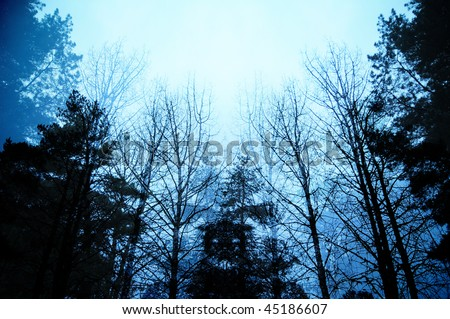 Dark moody forest with black trees reaching up towards the sky. - stock photo