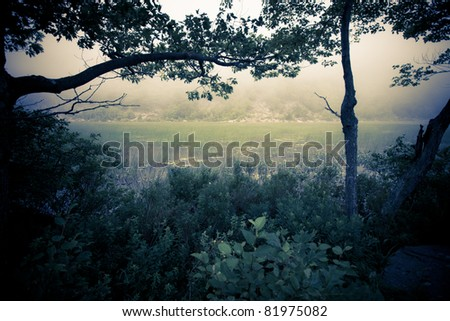 Dark, mysterious image of fog over marshy reeds with silhouetted trees - stock photo