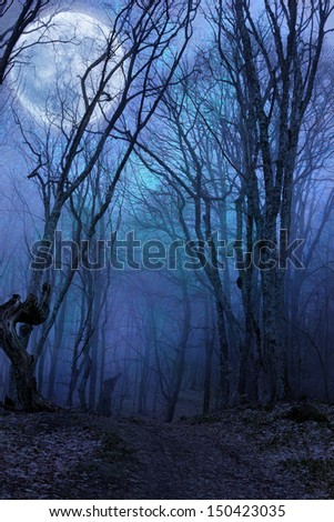 dark night forest against full moon