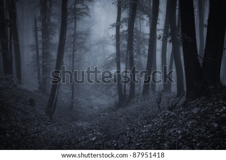 dark night in a forest - stock photo