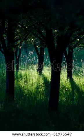 Dark park with bright sunlight - stock photo