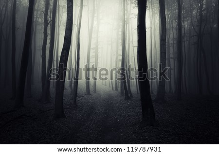 dark path through forest - stock photo