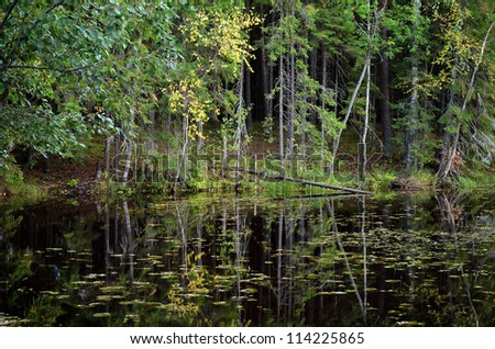 dark pine forest and a lake