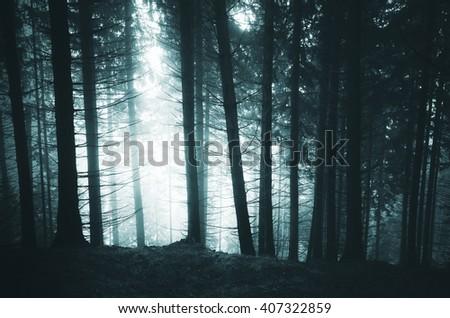 dark pine tree forest - stock photo