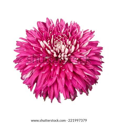Dark pink dahlia, isolated on white - stock photo