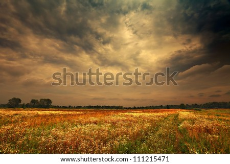 dark rainy clouds over the camomile field - stock photo