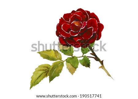 Dark red rose head with leaves branch original watercolor illustration - stock photo