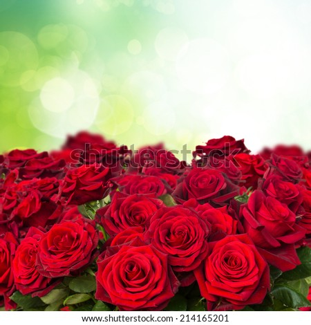 dark red roses  close up  in green garden - stock photo