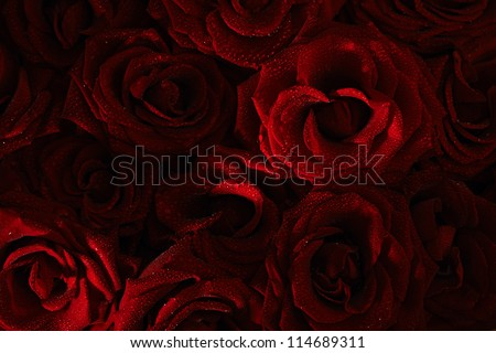 dark red with droplets Red natural roses background - stock photo